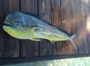 roatan deep sea fishing charter