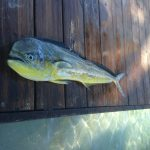 roatan deep sea fishing exploration