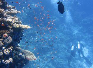 roatan snorkeling tours