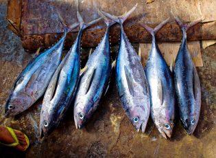 deep sea fishing roatan trips